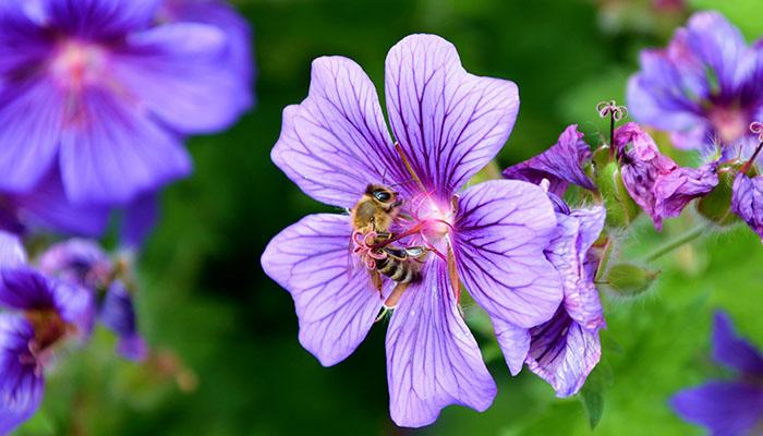 Allergies Flower