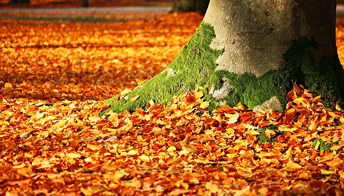 Allergy Leaves