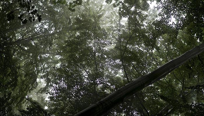 hurricane irma trees